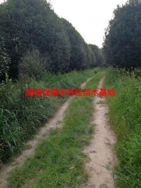 丹桂基地4