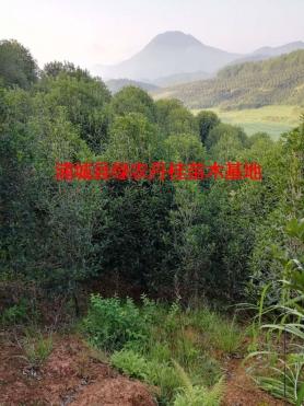 丹桂基地2